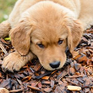 Dogs-11_thumbnail