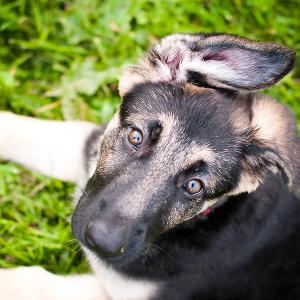 Dogs-12_thumbnail