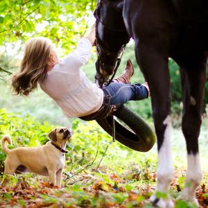 Equestrian-15_thumbnail
