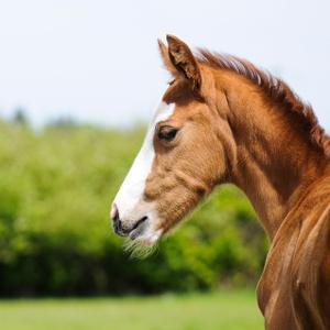 Equestrian-4_thumbnail