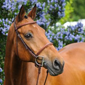 Equestrian-5_thumbnail