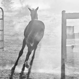 Equestrian-8_thumbnail