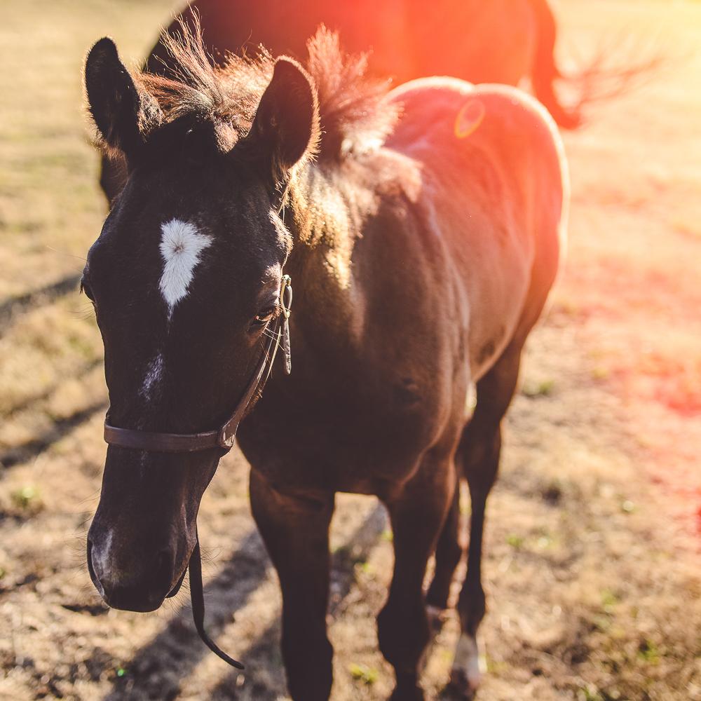 Sunny Foal-1